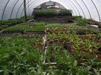 Full-greenhouse
